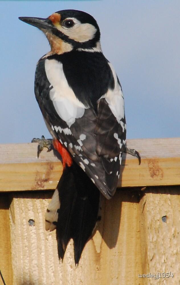 Woodpecker by wesleyj1954