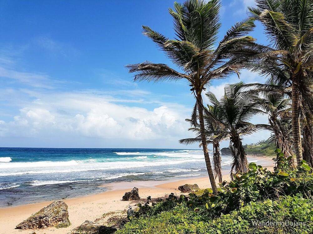 Barbados East Coast by WanderingBajans