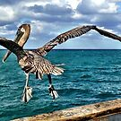 Pelican in flight by Ludwig Wagner