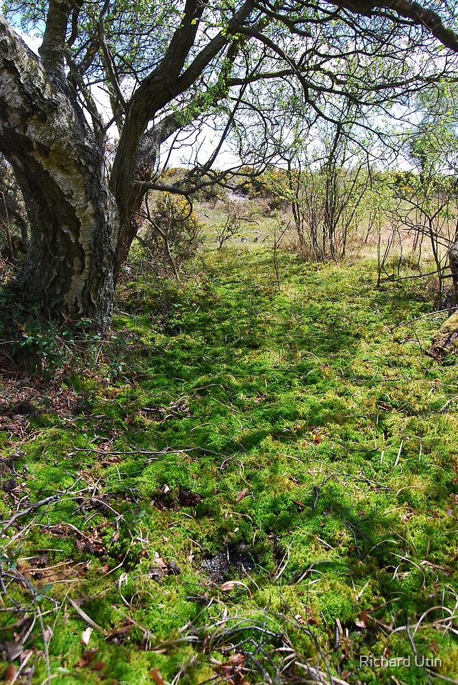 Carpet Of Green by Richard Utin
