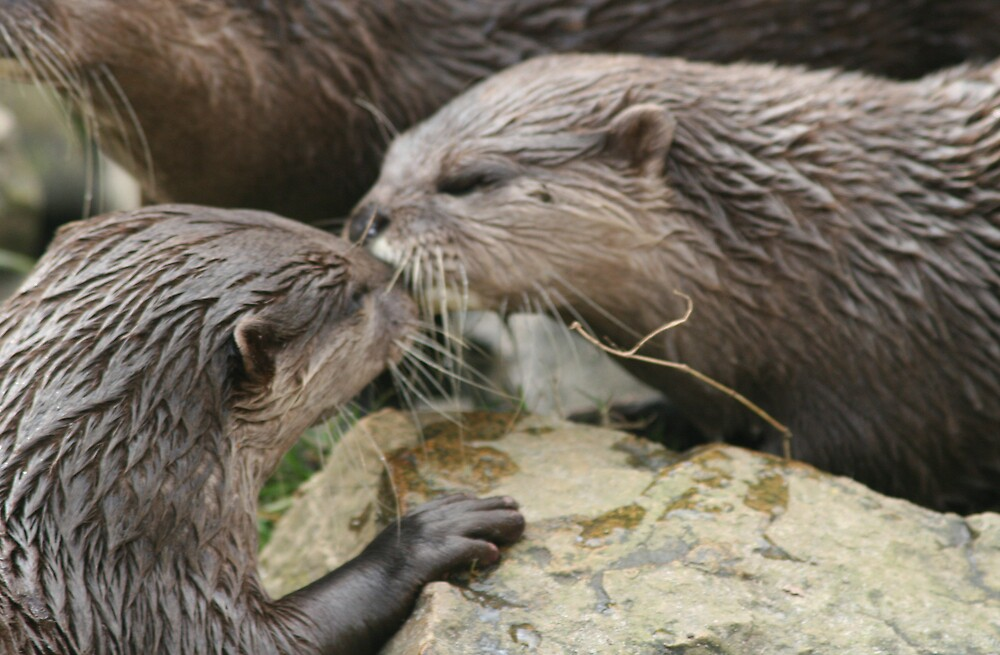 Kissing Otters by wingsyves