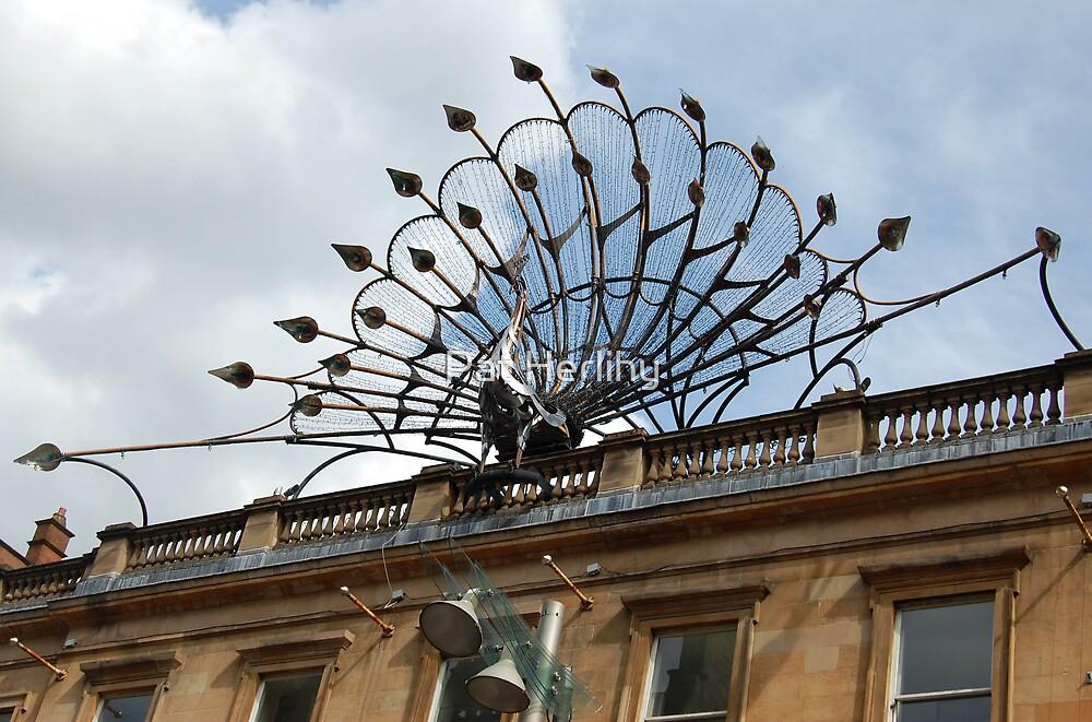 Peacock by Pat Herlihy