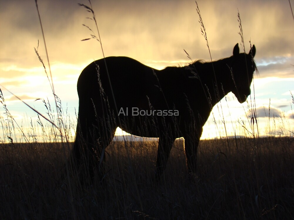 Horse Sunset Silhouette by Al Bourassa