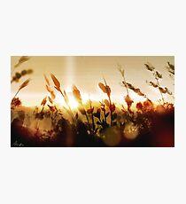 Golden Sun 2 Photographic Print