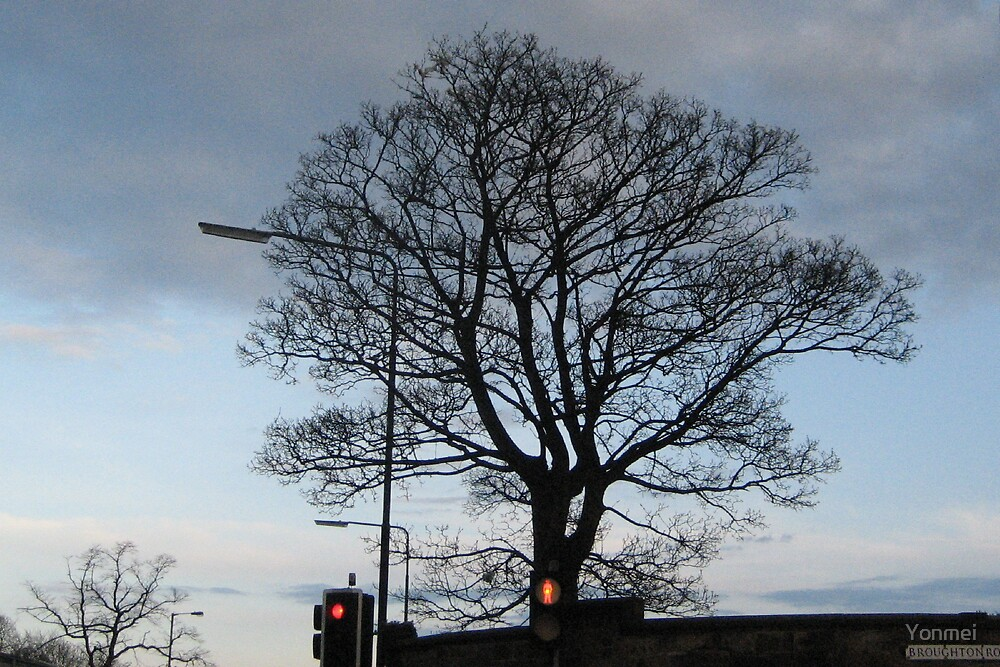 City Tree at Red Light by Yonmei