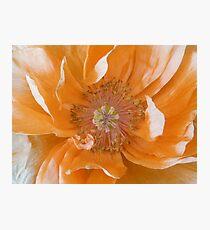 Orange Poppy Fading Photographic Print