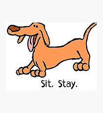 Sit Stay Daft Dachshund Sausage Weiner Dog Photographic Print