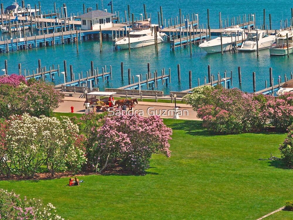 Lilacs of Mackinaw Island, MI. by Sandra Guzman