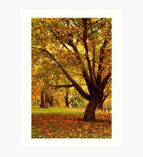 Bega during autumn Art Print