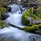 Spring Creek II by Julene Mendenhall