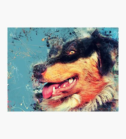 australian shepherd dog #dog Photographic Print