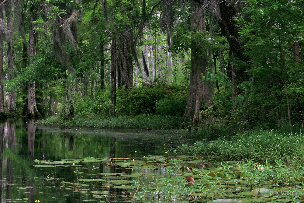 Swamp Reflections by photosan