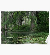 Swamp Reflections Poster