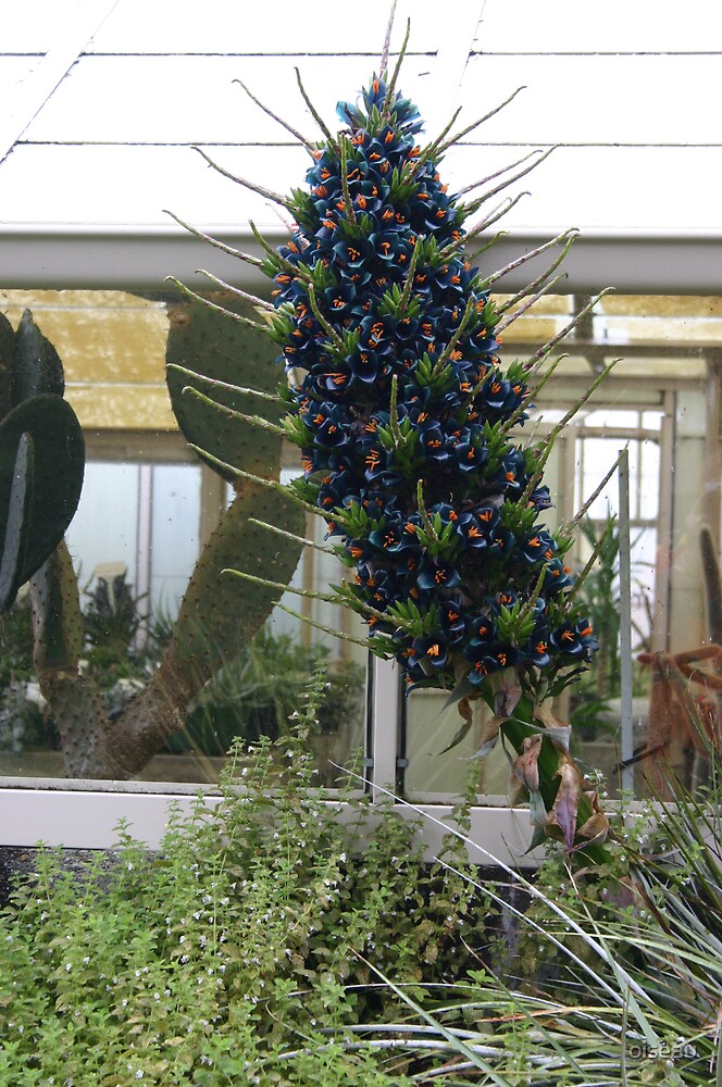 Amazing for sure - over 6ft Puya spike - NZ Park by oiseau