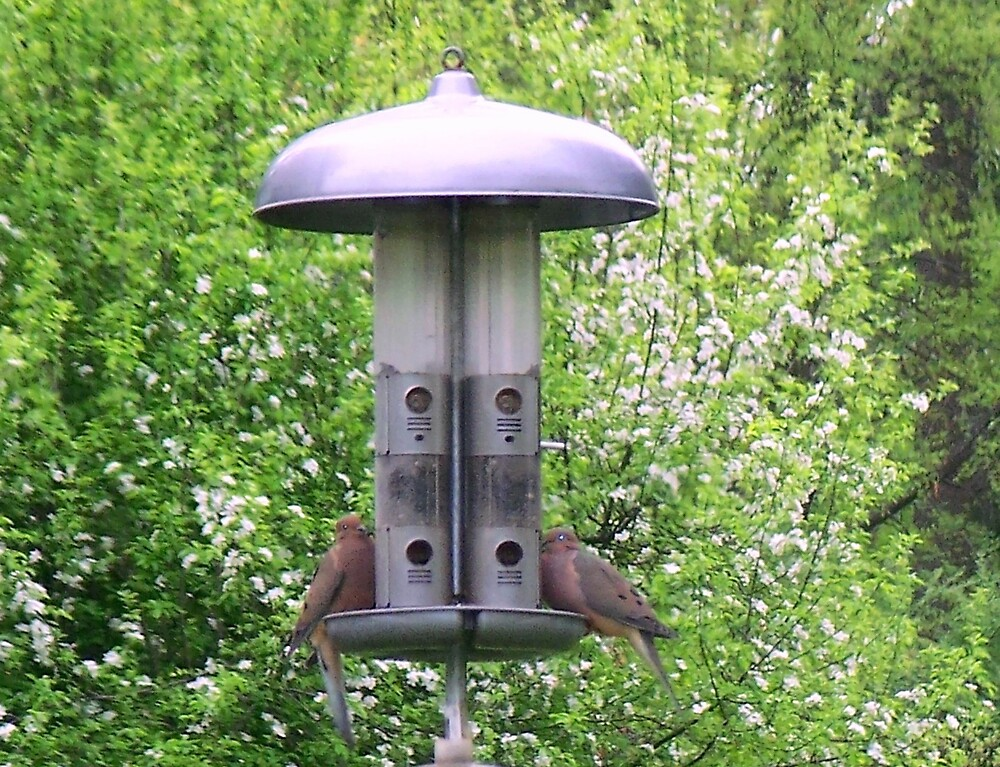 Doves at the feeder by Judi Taylor