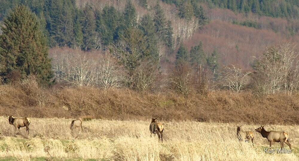 Elk Herd by Kat Miller