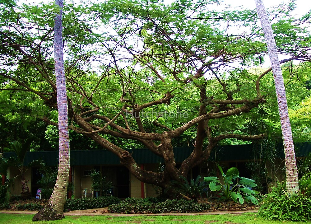 Tree by Hutchstone