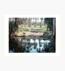 Donkeys drinking from the Jordan river Art Print