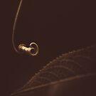 Leaf me alone by alan shapiro