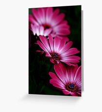 Fading Flower Beauty Greeting Card