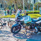 Cultured Bike by Pauline Tims