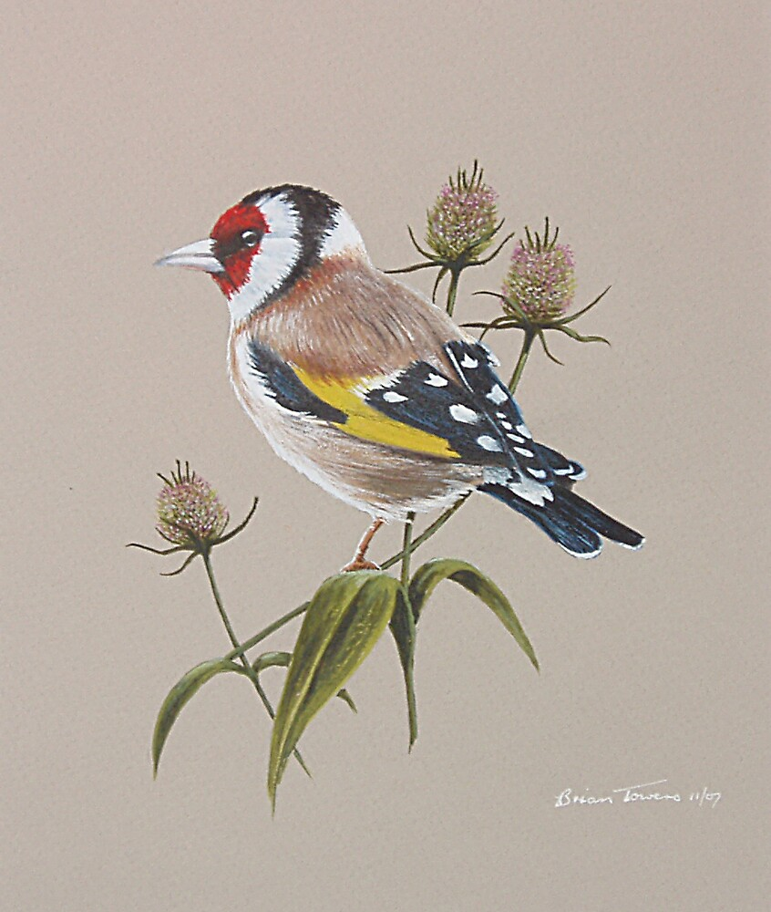 Goldfinch on thistles by Brian Towers