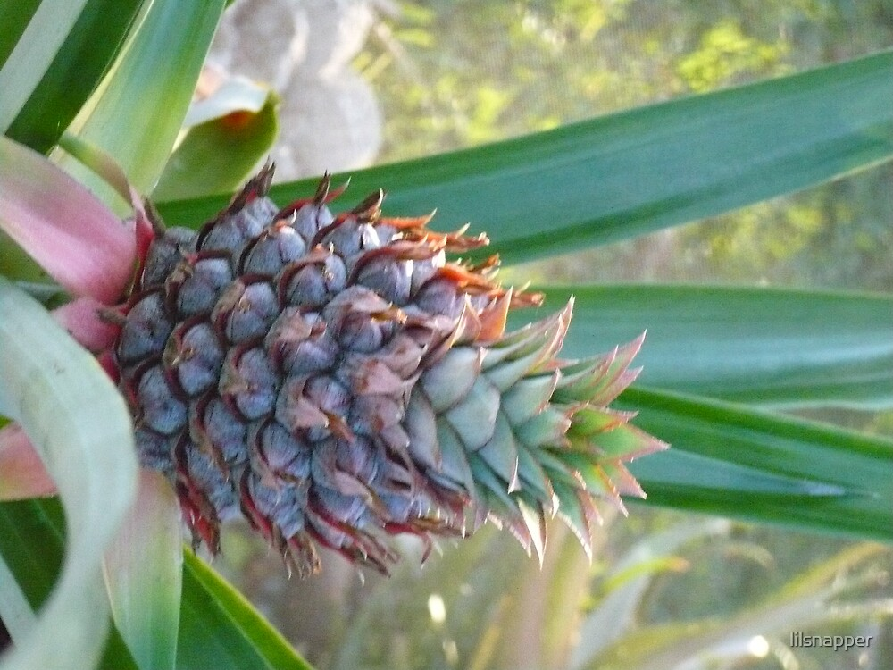 """""""THE PURPLE PINAPPLE"""" by lilsnapper"""