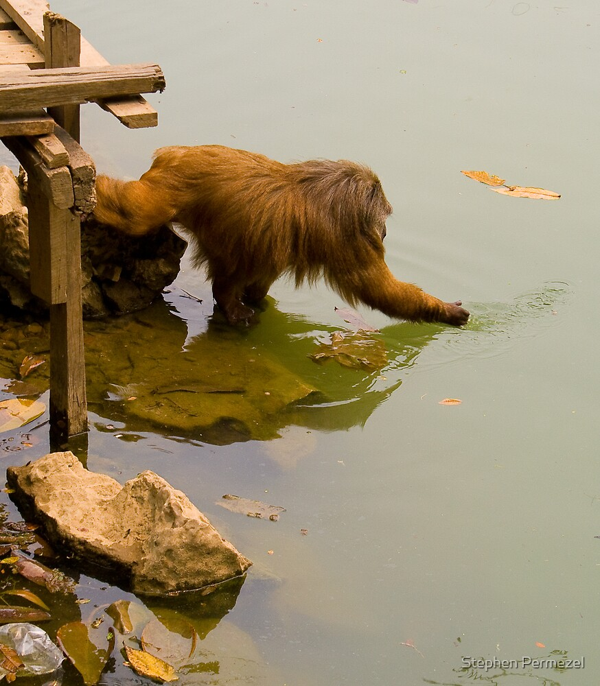 Monkey Reaching - Thailand by Stephen Permezel