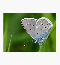 Farfalla Photographic Print
