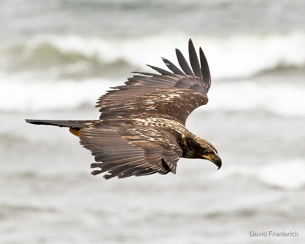 Soaring by David Friederich
