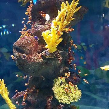 Found Nemo by Jaayp