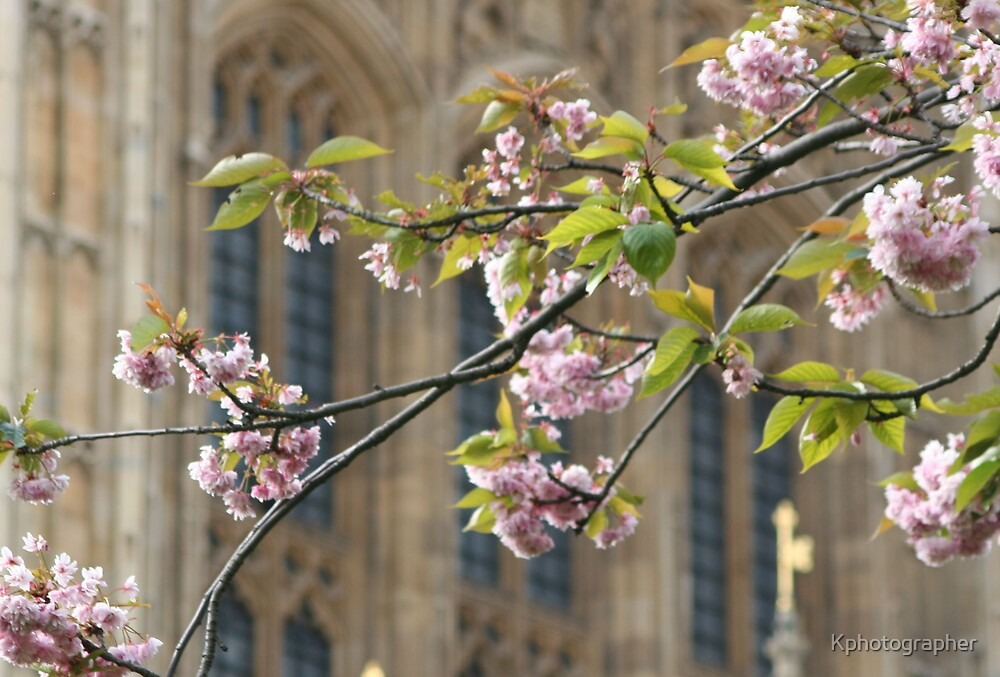 Westminster Blossoms by Kphotographer