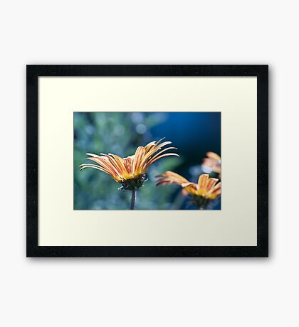highlighted Framed Print