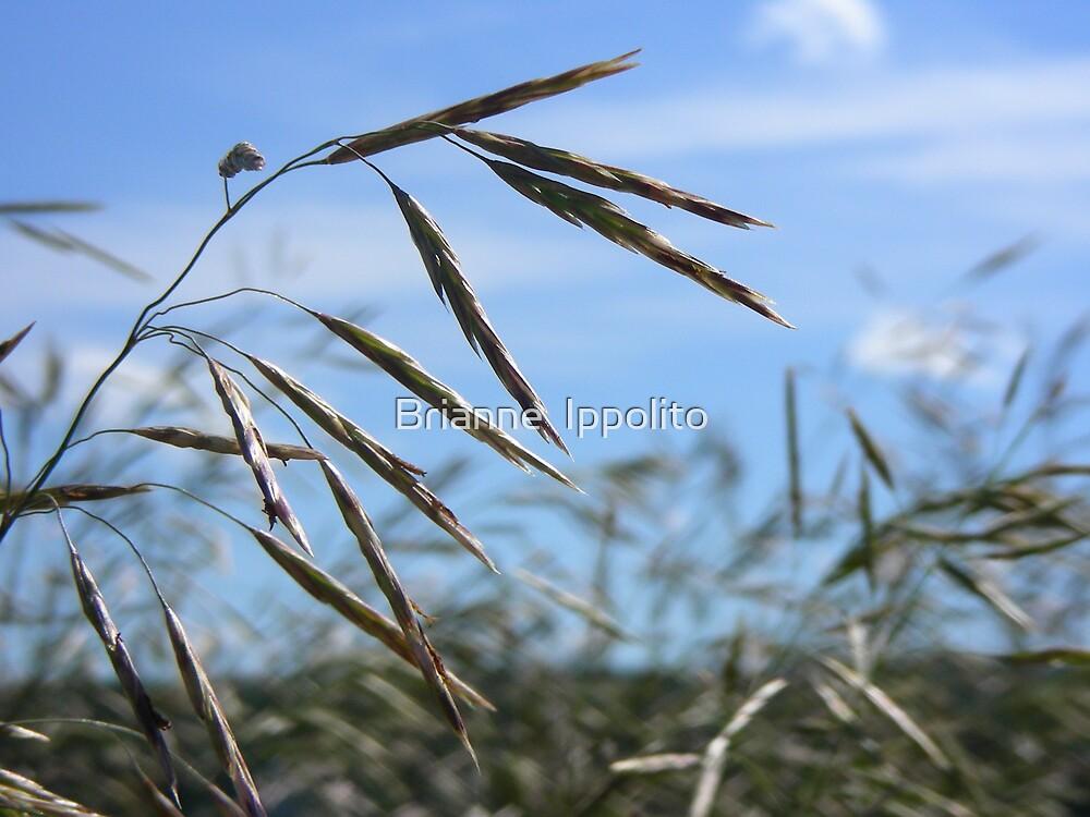 Prairie Wind by Brianne  Ippolito