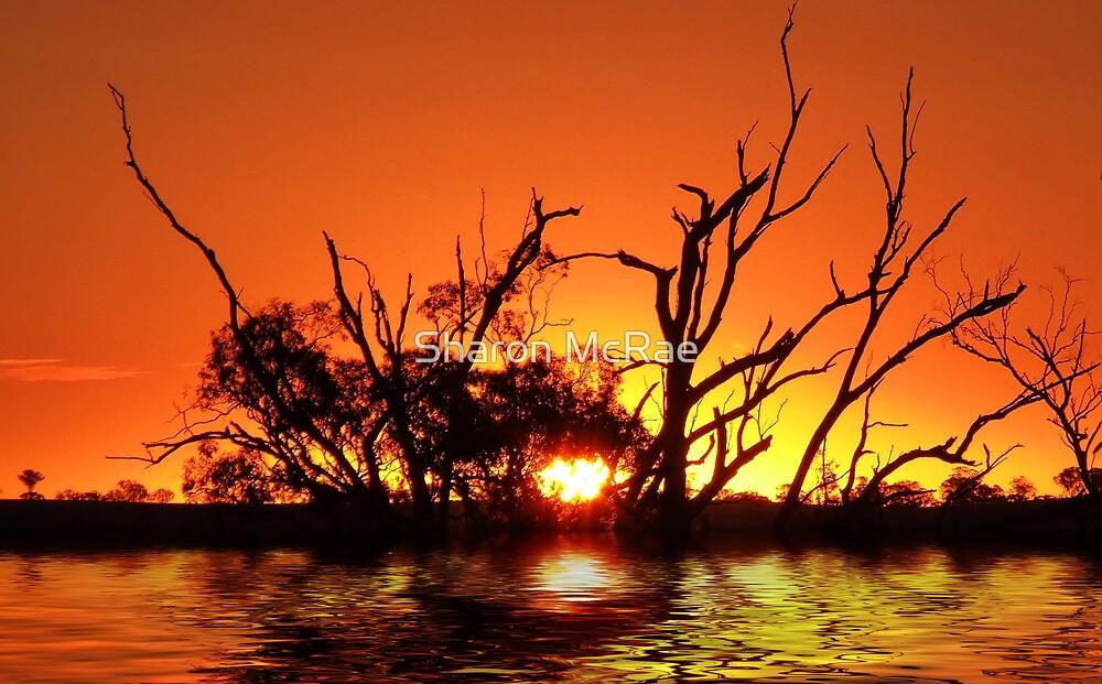 Flooding Sun by SharonD