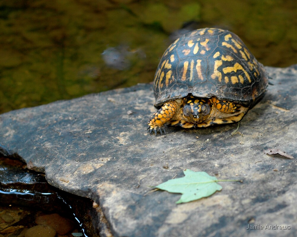 Loafing Turtle by Jamie Andrews