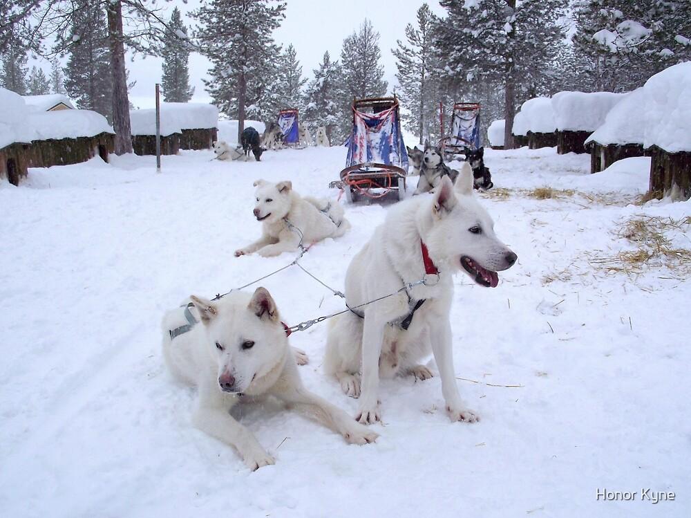 Husky Sleighs - Lapland, Sweden by Honor Kyne