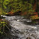 Spring Stream in Woods by JennyRainbow