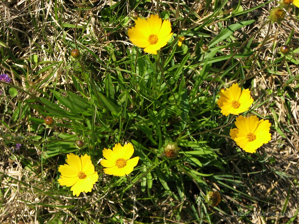 wild flowers by Debbie Montgomery