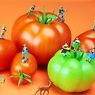 Tomato Harvest by Paul Ge