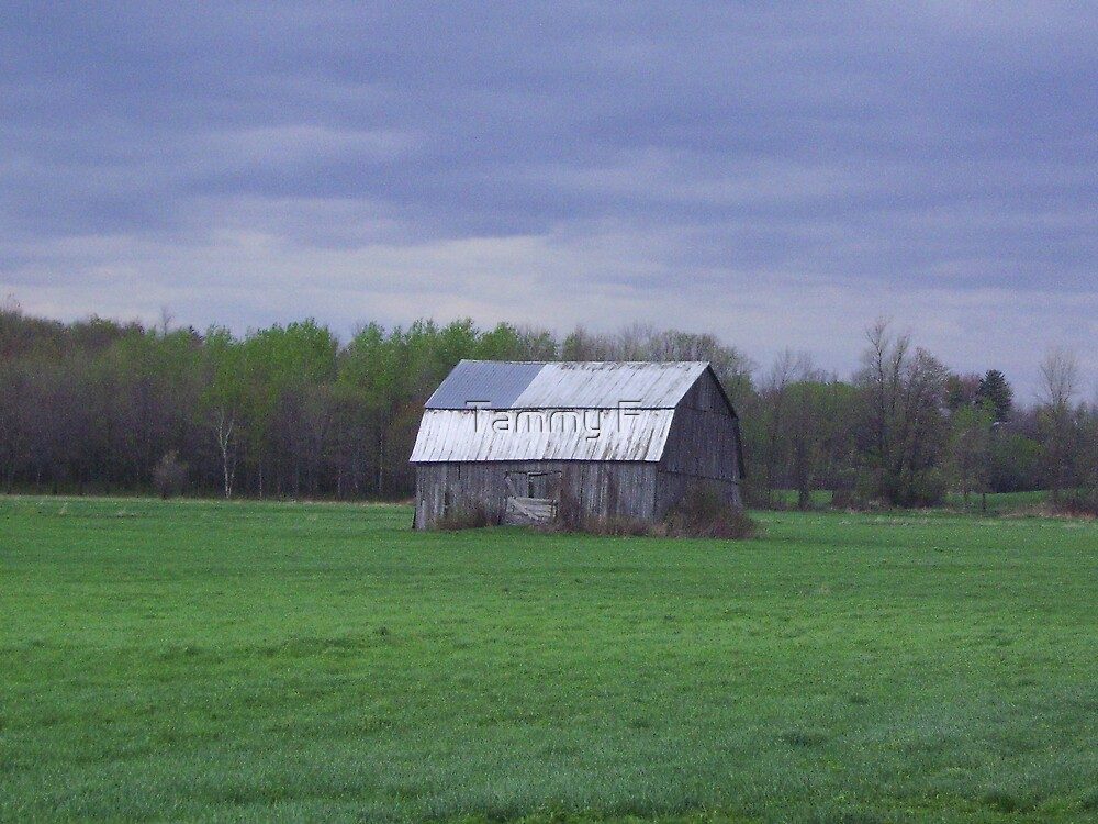 Lonely Barn by Tammy F