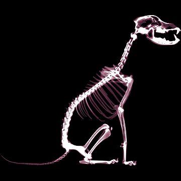 Black Dog X-Ray Skeleton by MoPaws
