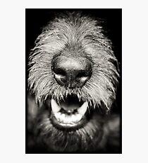 Dog Nose Best in Dark Photographic Print