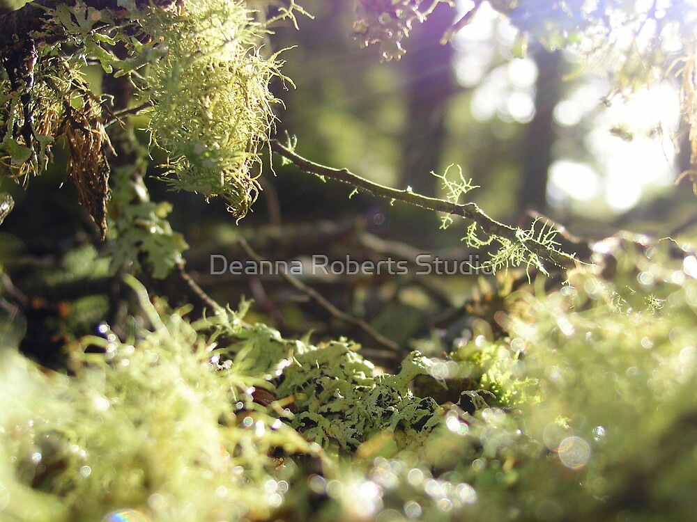 Forest Fairytale by Deanna Roberts Think in Pictures