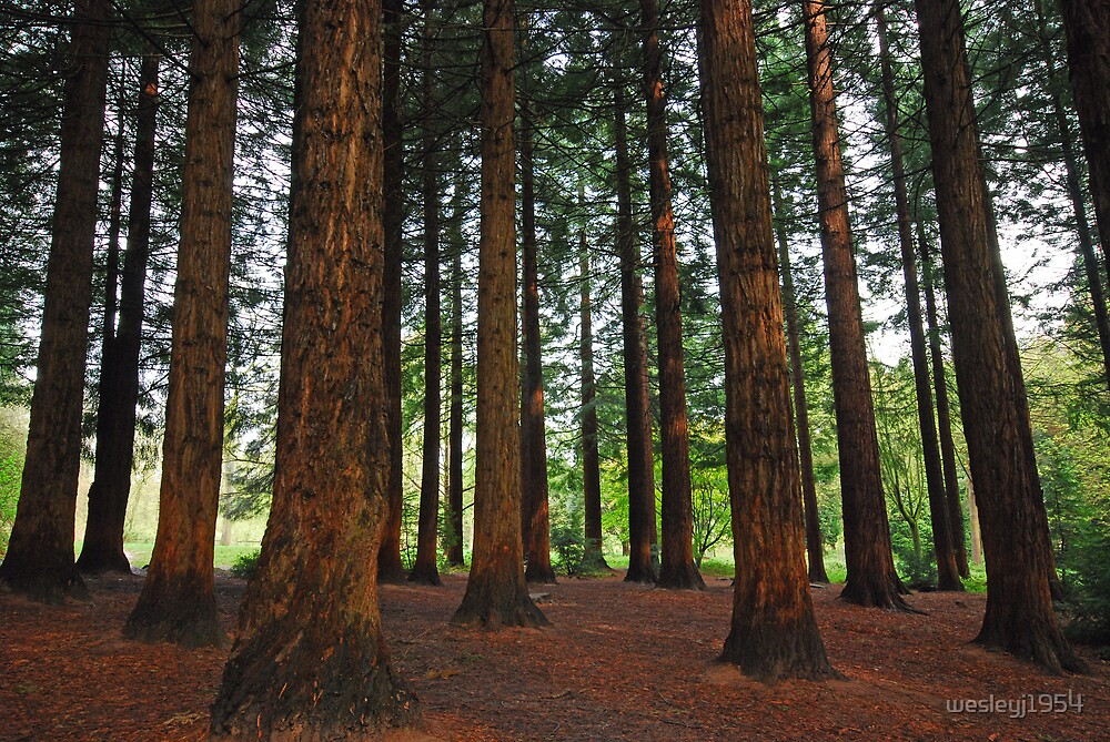 The Sequoia at Queenswood by wesleyj1954