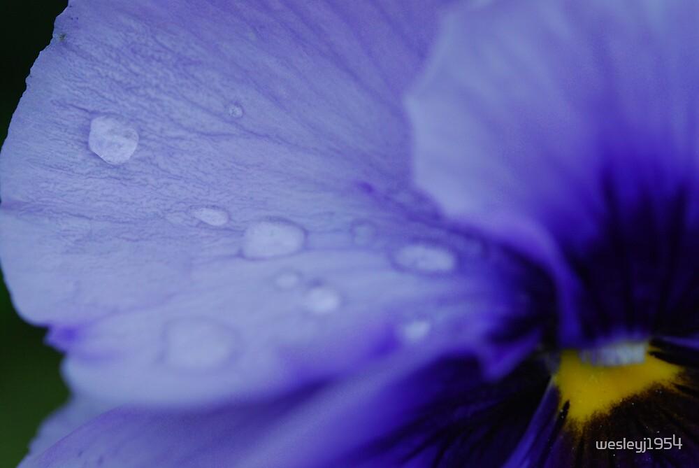 Iris by wesleyj1954