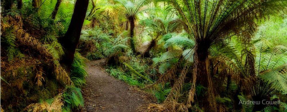 melba gully by Andrew Cowell