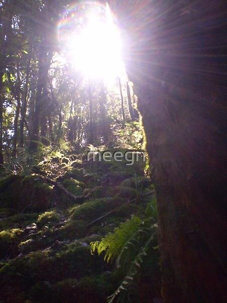 rainforest by meegn
