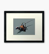 Pterorhynchus Framed Print