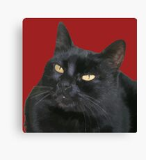 Black Cat With Yellow Eyes Vector Canvas Print